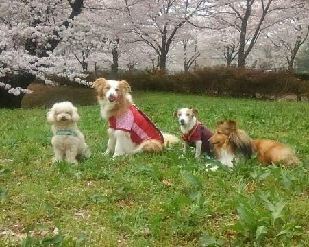 0401武蔵野の森公園ー1.jpg