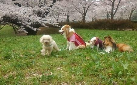 0401武蔵野の森公園ー2.jpg