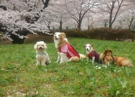 0401武蔵野の森公園ー3.jpg