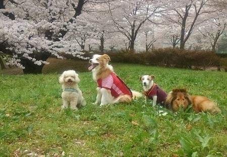 0401武蔵野の森公園ー4.jpg